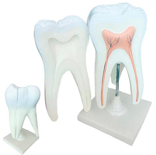 Зубной нерв и его функции